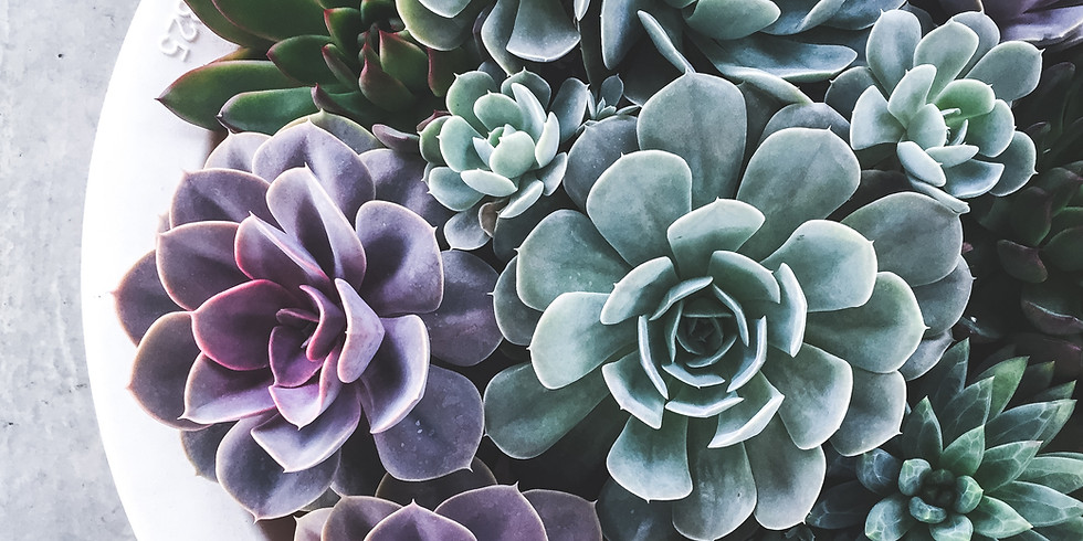 Succulent Sunday Workshop