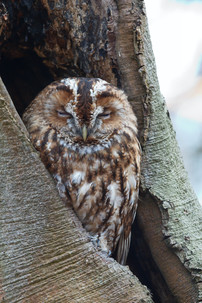 Why OWLS represent Mindfulness