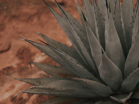 Cactus & Agave Frost Damage