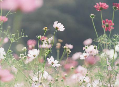 秋花粉 襲来