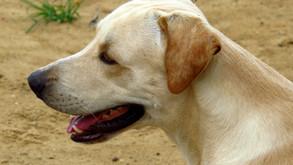 Rede de Proteção adia live de adoção de animais