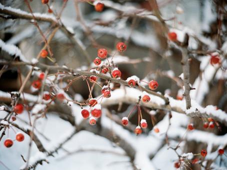 New Winter Tea Blends