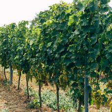 Weingartenbedarf