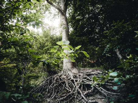 Be Rooted in HOPE