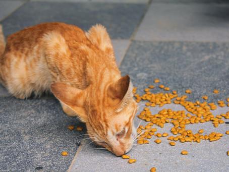 Inilah Manfaat Taurin Untuk Kucing Dan Akibat Kucing Kekurangan Sumber Nutrisi Tersebut