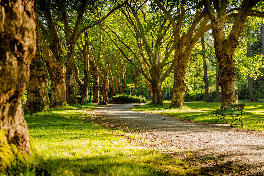 The beauty of a park, which you can benefit from by choosing Park Therapy with Marble Wellness