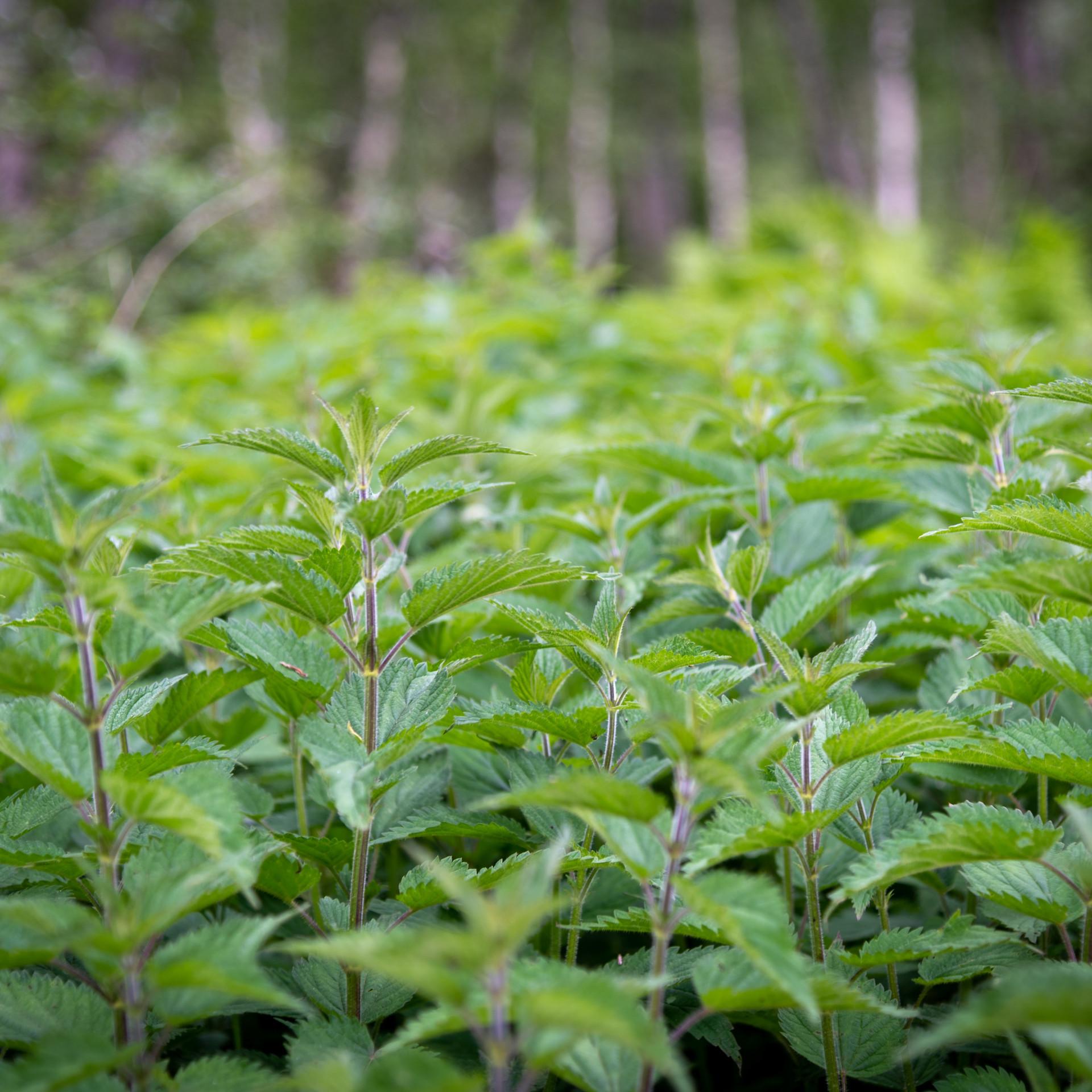 Wholesale Herb Farm Colorado