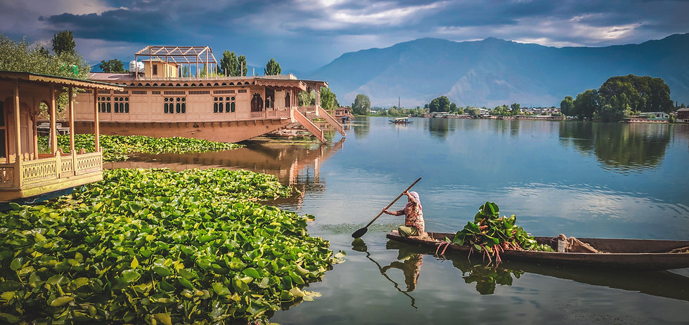Image by Divya Agrawal