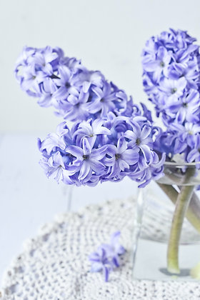 Scented Hyacinths from