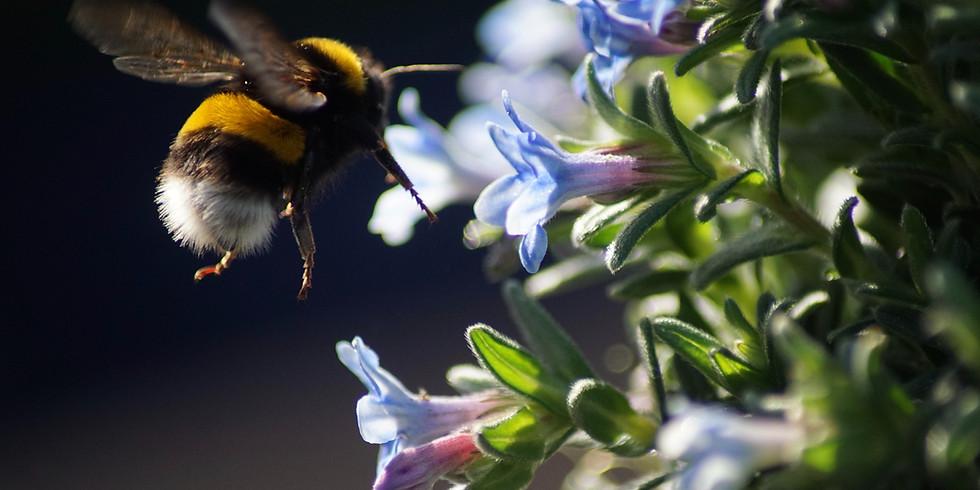 10 SPOTS Bee Lazy Retreat