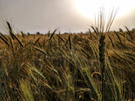 Aumentan 6.4% exportaciones agropecuarias durante el primer cuatrimestre de 2020