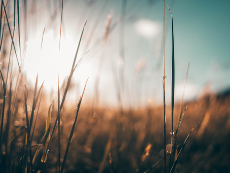 My Field, by Maya Antebi