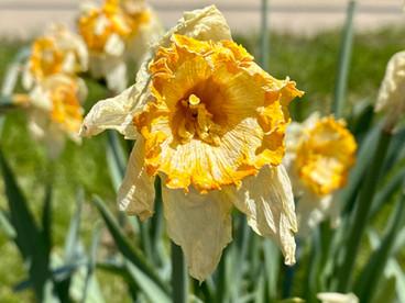 #LentVoices : Sacrifice and Reflection