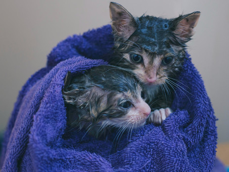 How to Give my Cat a Bath