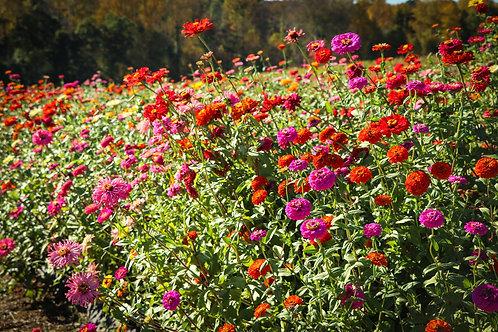 4 Week September Flower Subscription