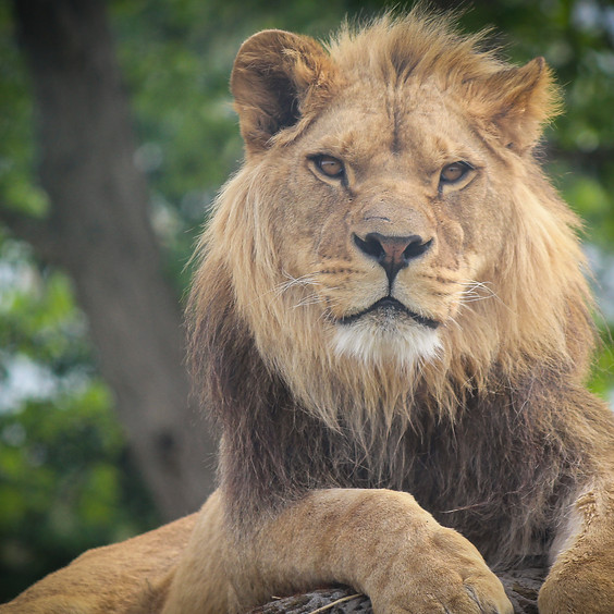 Cincinnati Zoo | $69