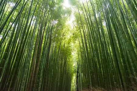 Bambu Eco Cleaning Brighton