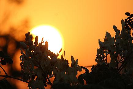 Image de Sachin Janakar