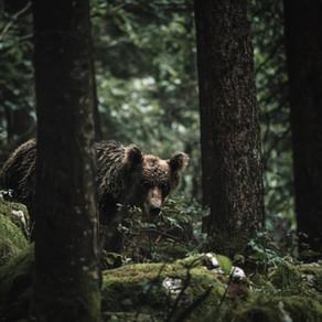 Bear Story by Jesse Millner