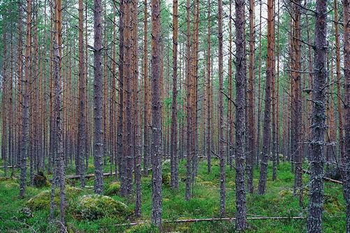 Image by Miikka Luotio