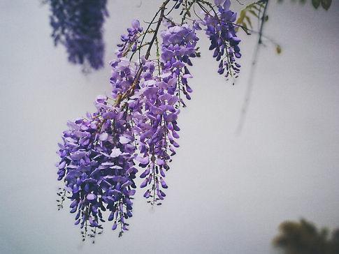Image by Ana Khutsishvili