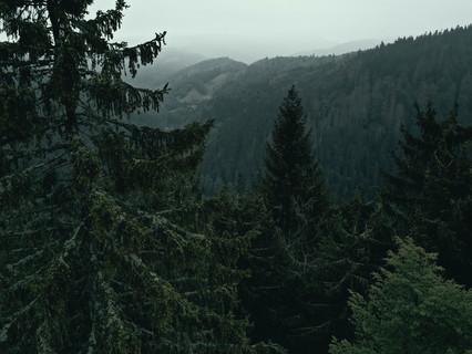 Schwarzwald - die nachhaltige Ferienregion
