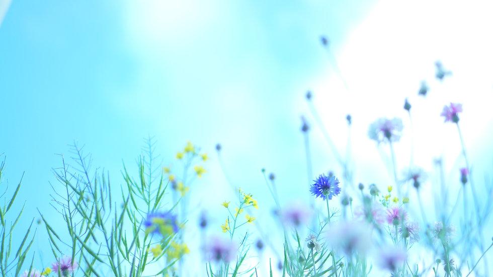 Image by kiyomi shiomura