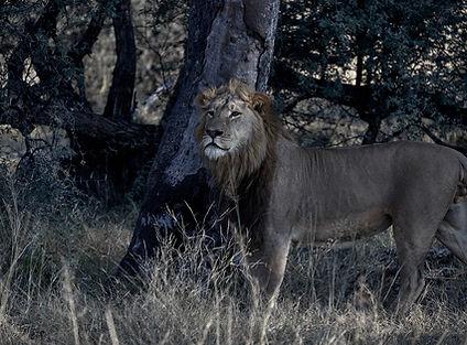 Image by Tatenda Mapigoti