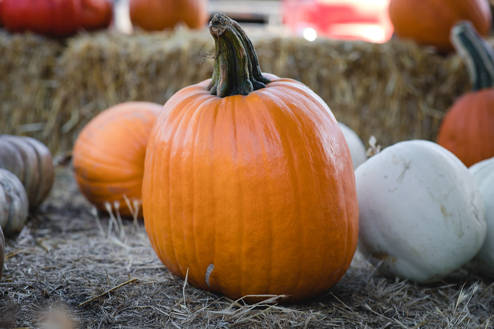 How to make a thankful pumpkin