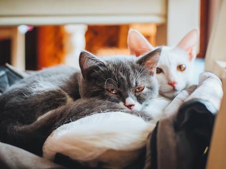 Katzen lassen sich in 5 Persönlichkeitstypen unterteilen