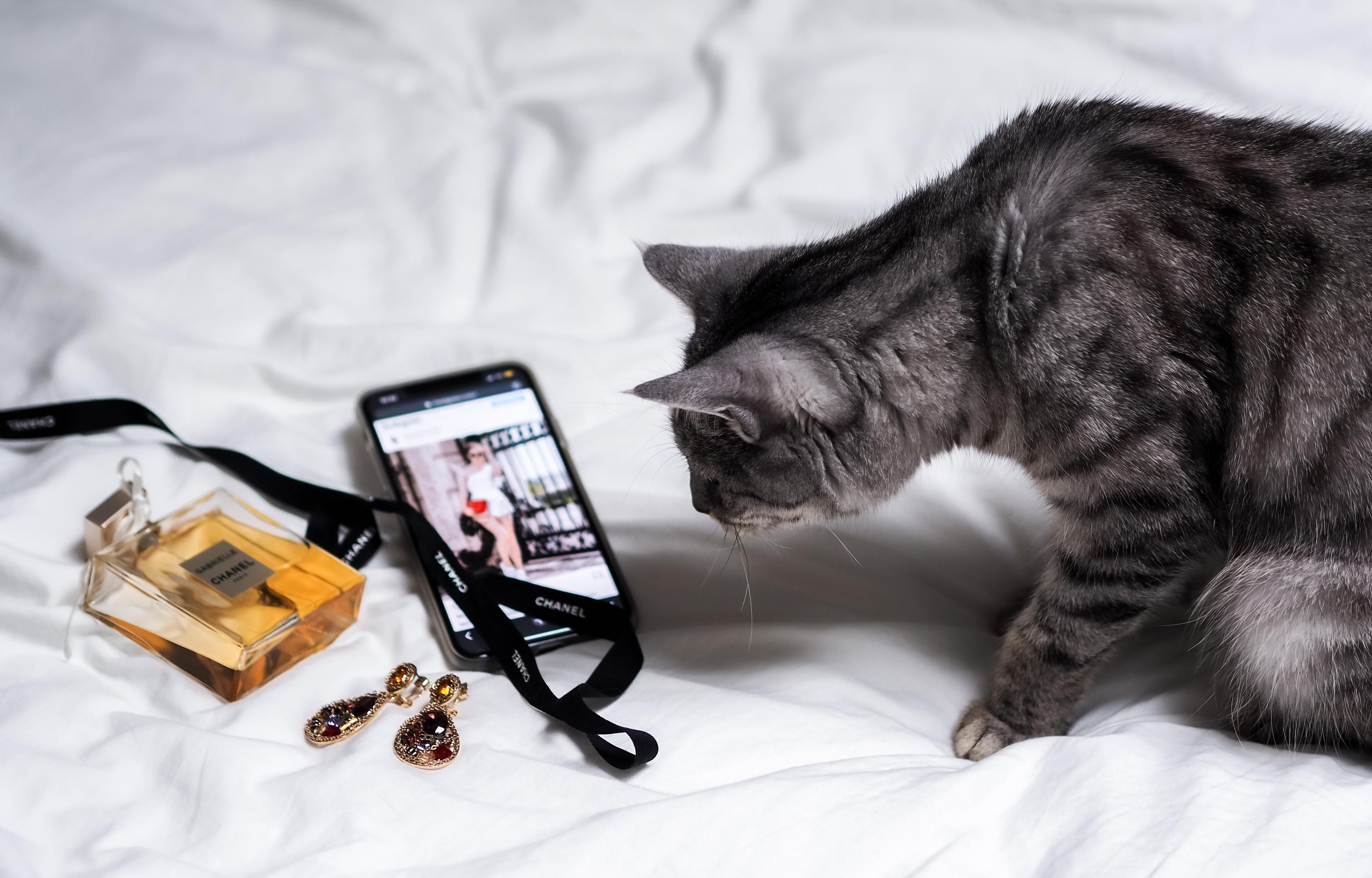 Virtual Cat Training +