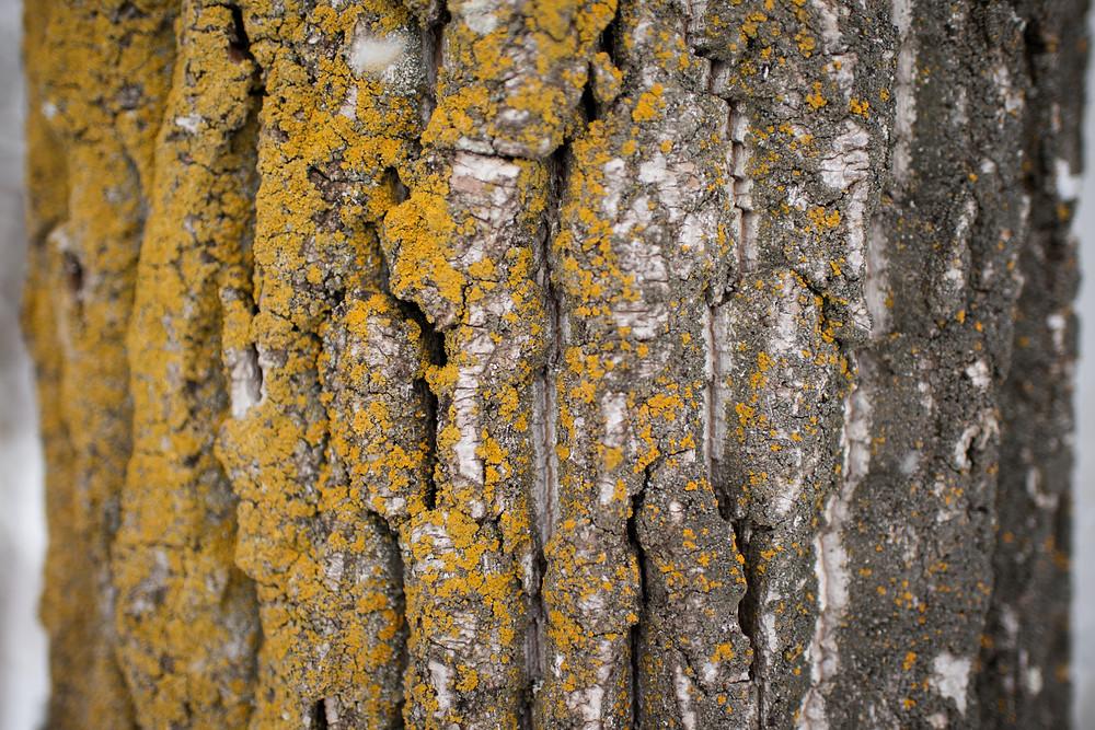 tree bark contains nerolidol terpenes