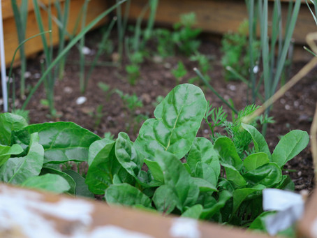 Urban Farms Are Thriving During The Pandemic