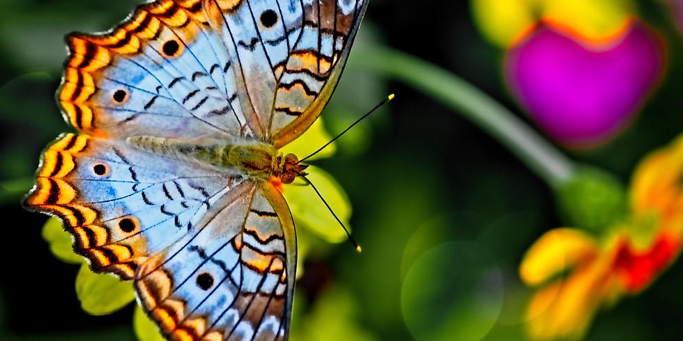 蝶々を作ってお歌を歌おう (3-6歳向け) 【Ai】