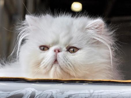 Kucing Terlucu di Dunia