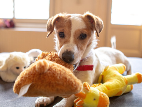 7 Mentally Stimulating Indoor Dog Toys for Every Dog