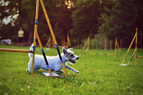 dog at dog daycare with training