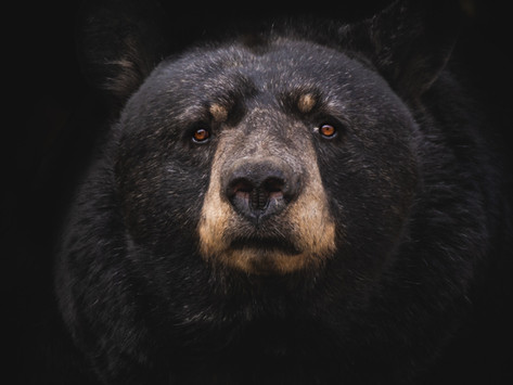 Bubble alert from Long term bear - Stocks & Cryptos