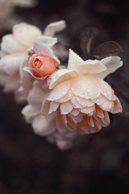Image by Nadiya Ploschenko