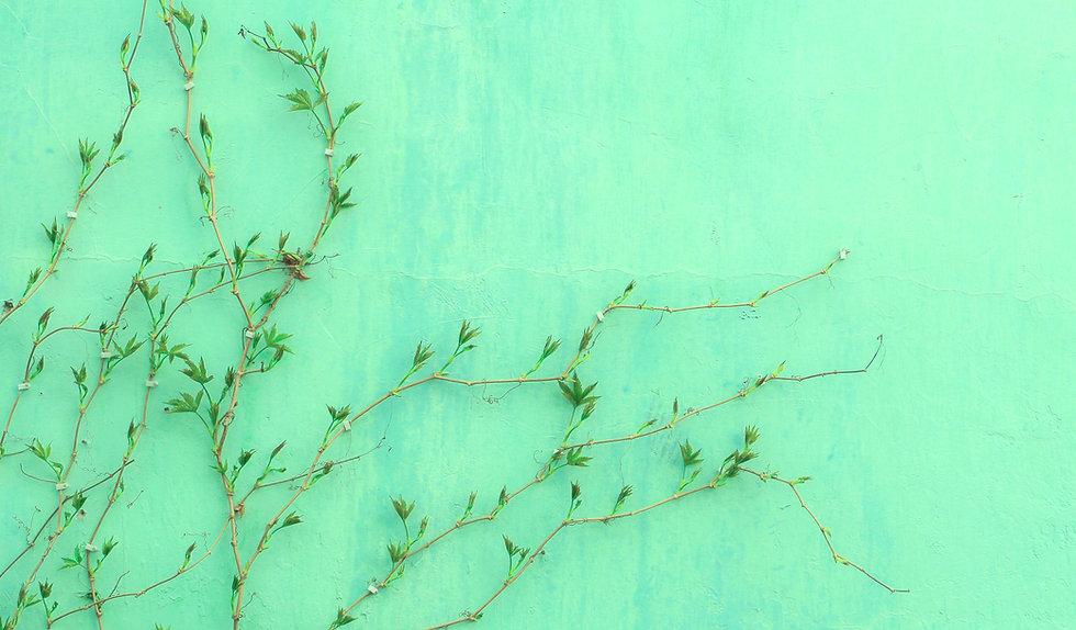 Image by Runze Shi