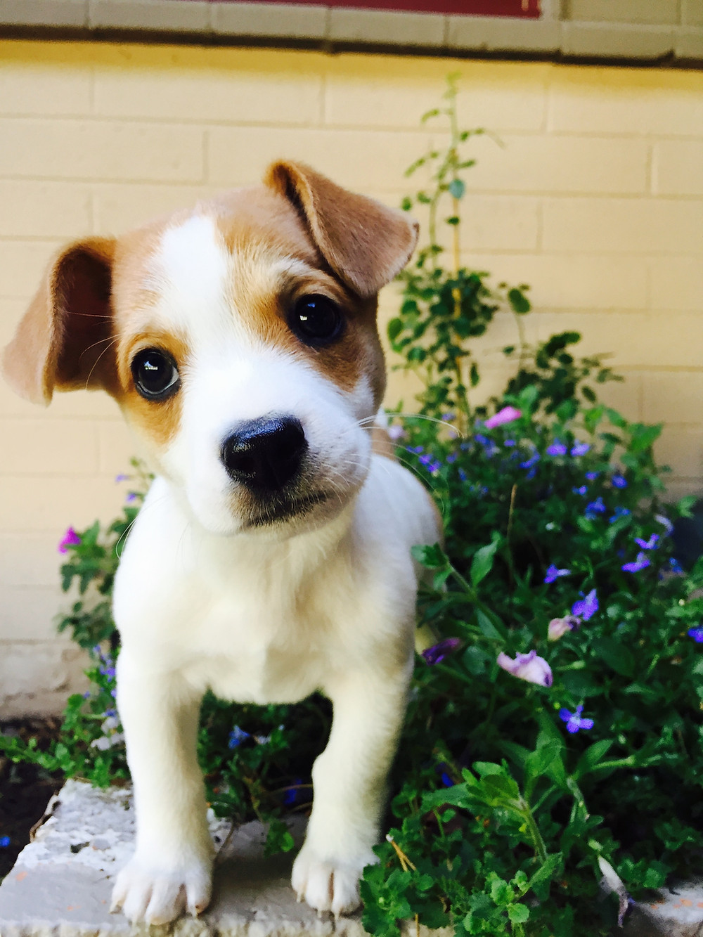 Dog herbal plant