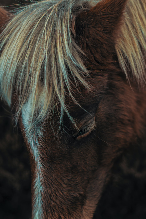 A horse knows. He knows if you know. He also knows if you don't know.