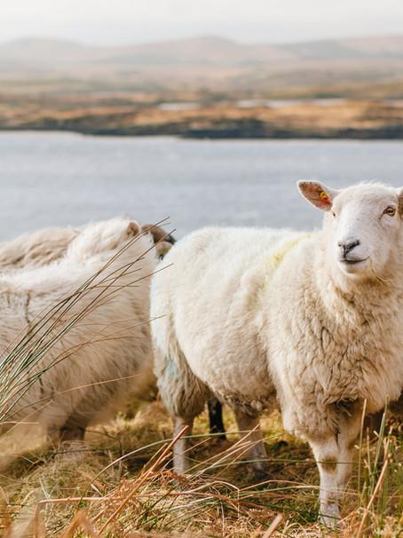 Wool scour's resurrection could help transform Australian merino production
