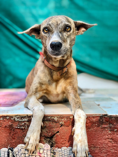 Verhaltensberatung Hundeschule Limmathunde