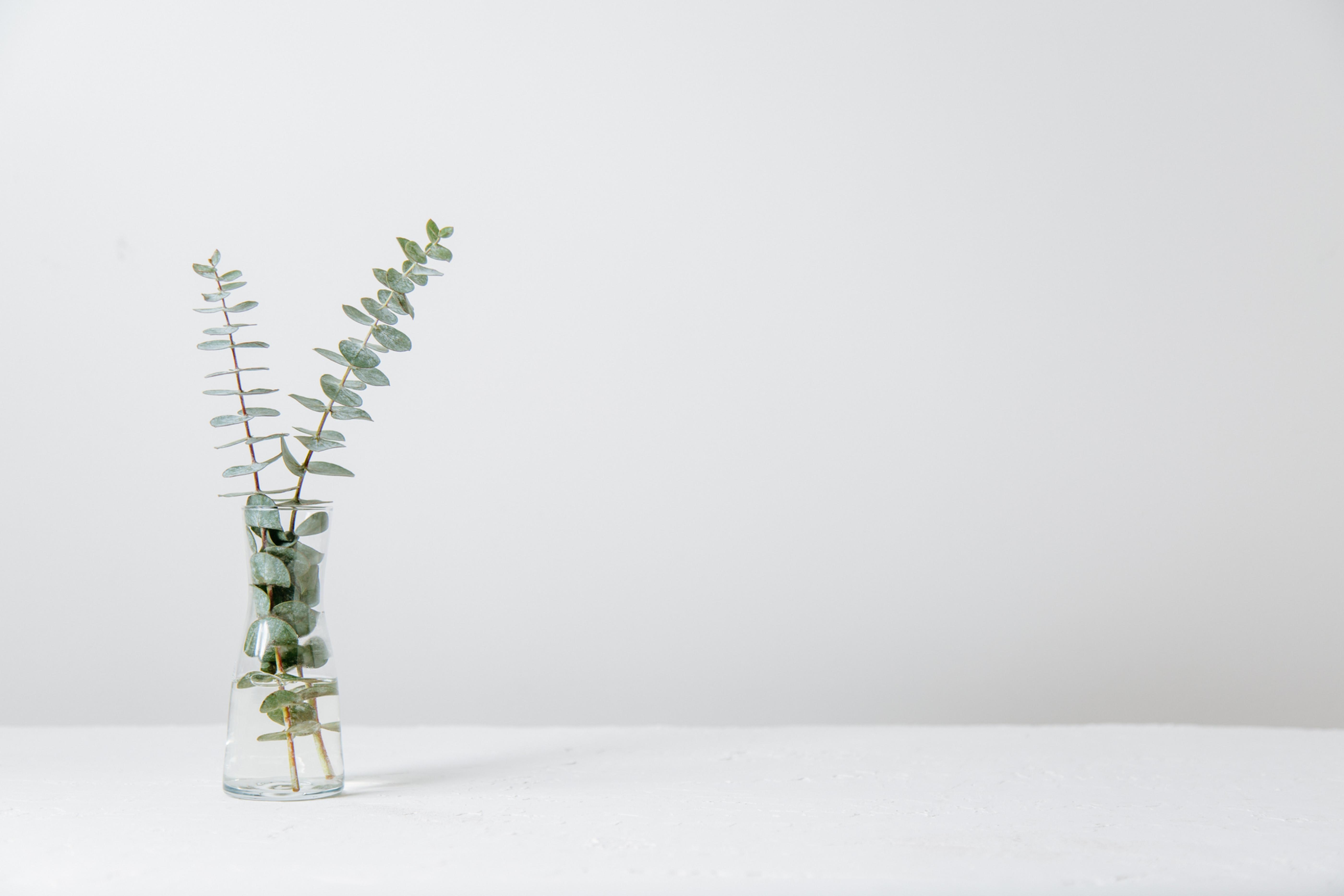DTL: Vulnerability in Leadership