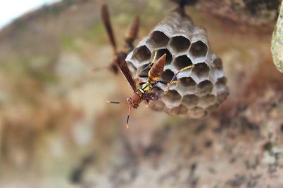 Pest Control in Springville