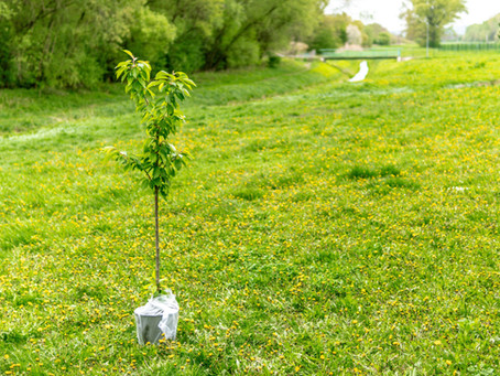 Common Tree Planting Mistakes You Should Avoid