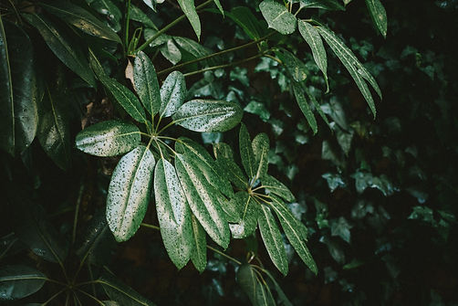 Tropical Moody Plants