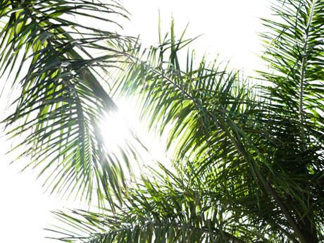 Politics and Palm Branches