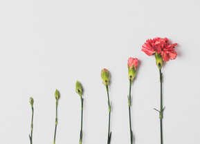 Growing your practice - the top 3 marketing activities of successful private practices.